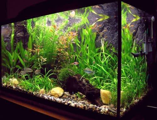What is deionised water used for - aquariums