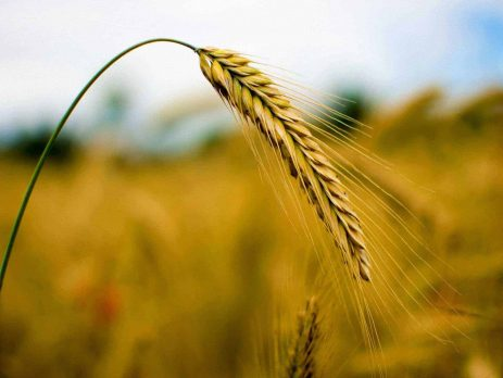 How Is Ethanol Made - fermentation by crops