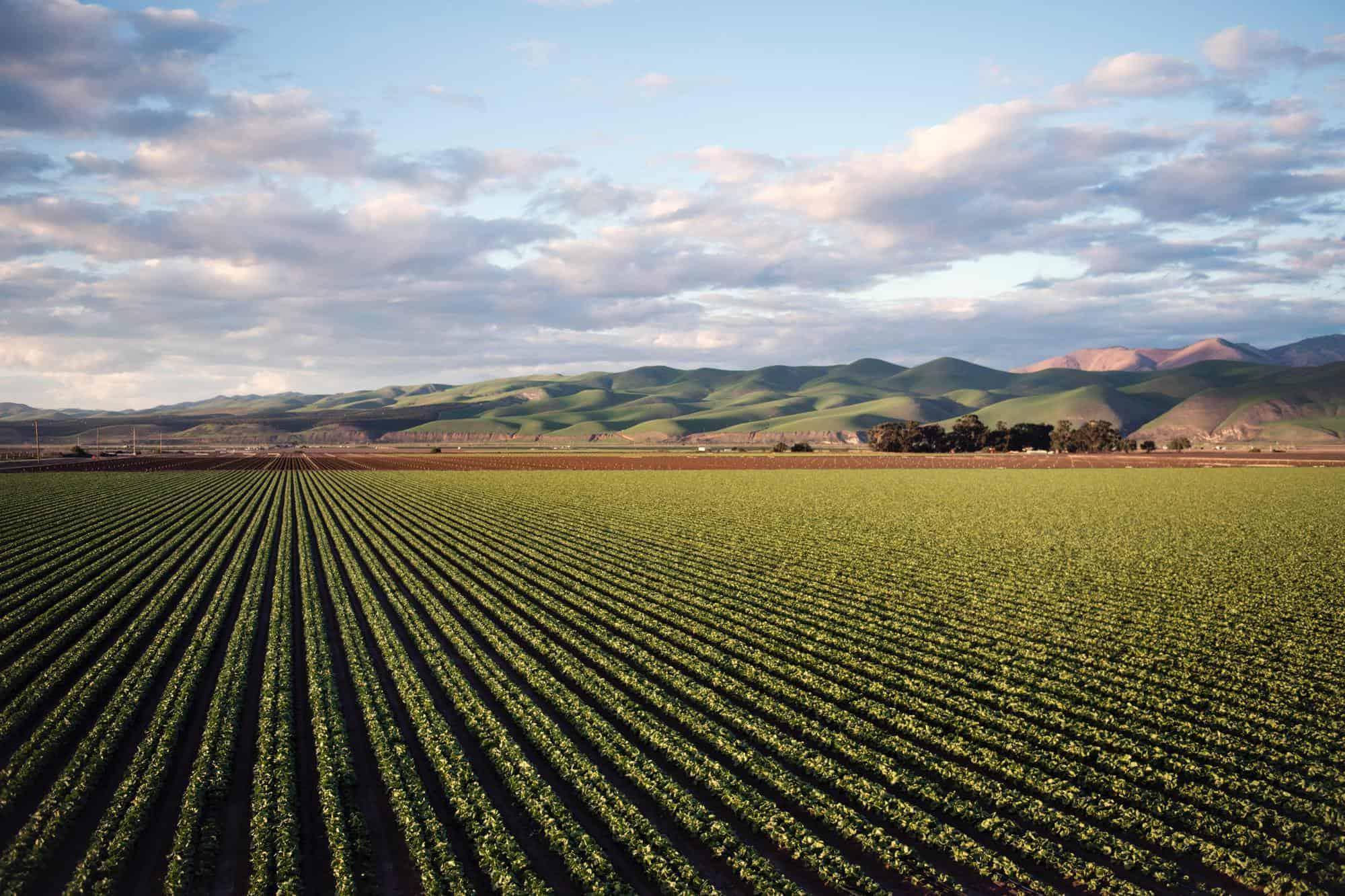 Uses of sulphuric acid to make fertiliser for crops