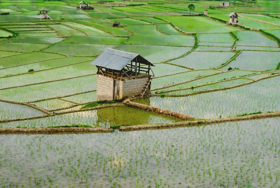 The ideal soil pH to grow rice is 6